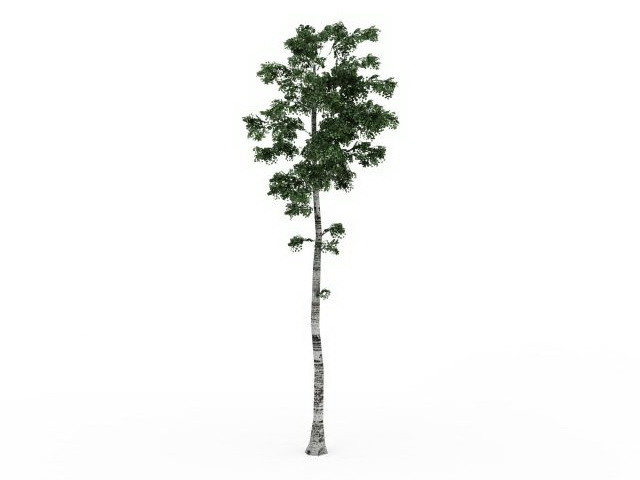 Tall birch tree 3d model 3ds max files free download