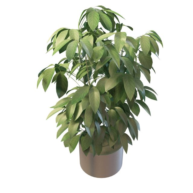 Green Foliage House Plants 3d Model 3ds Max Files Free Download Modeling 29939 On CadNav