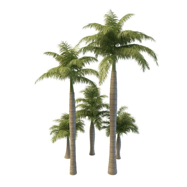 Royal palm trees 3d model 3ds max files free download