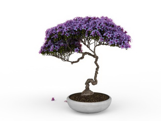 free 3d kitchen design software modern lighting ideas wisteria bonsai tree model 3ds max files download ...