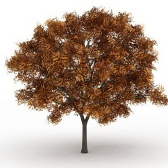 Free 3d Kitchen Design Software Tile Ideas Ash Fraxinus Tree In Fall Color Model 3ds Max Files ...