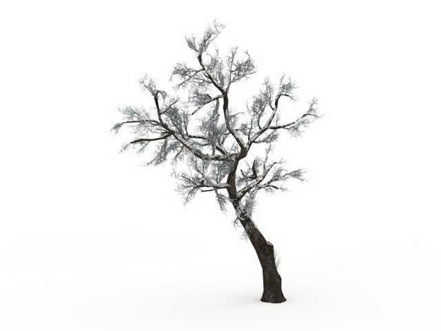 Snow covered hawthorn tree 3d model 3ds max files free