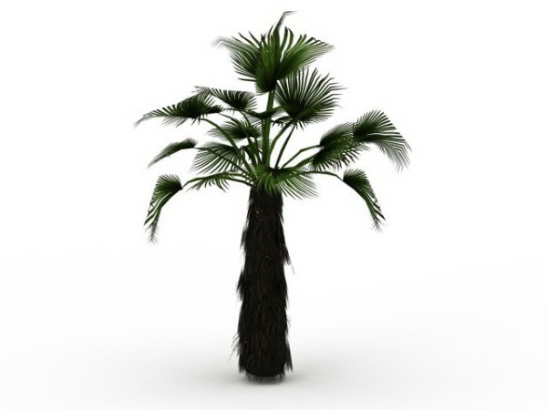 25+ Japanese Fan Palm Trees For Landscaping Pictures and