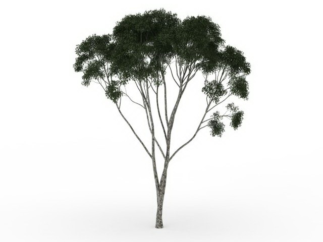 Fig Tree 3d Model 3ds Max Files Free Download Modeling