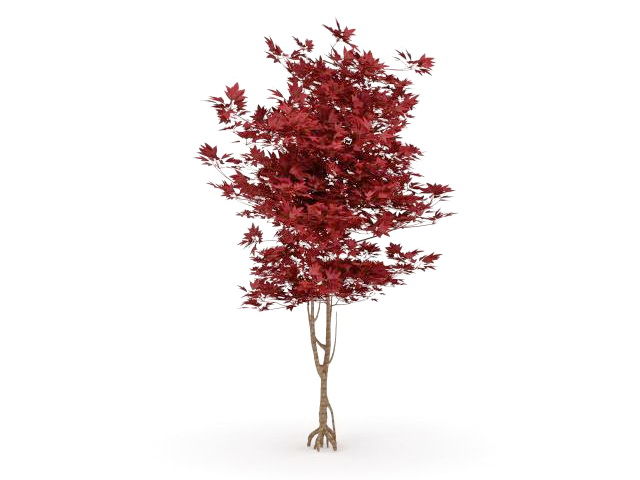 Japanese Red Maple Tree 3d Model 3ds Max Files Free