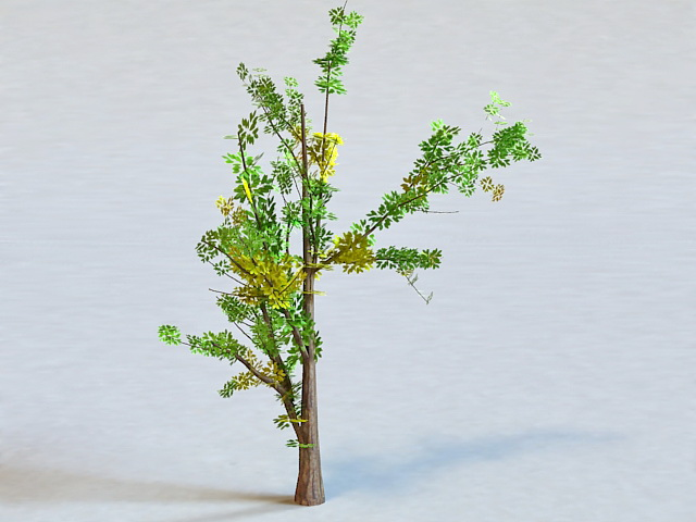 Generic Tree 3d Model 3D Studio,3ds Max Files Free