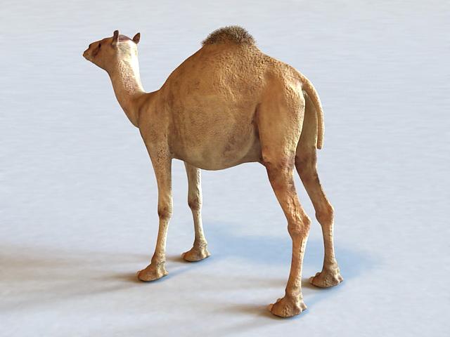 Dromedary Camel 3d model 3ds Max files free download