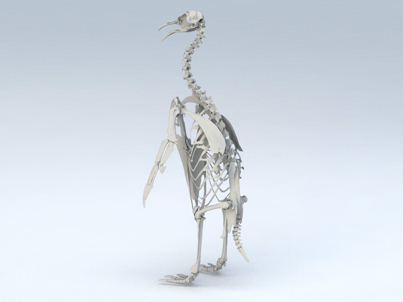 golden eagle skeleton diagram tennant t1 wiring emperor penguin 3d model 3ds max object files free download highly detailed of