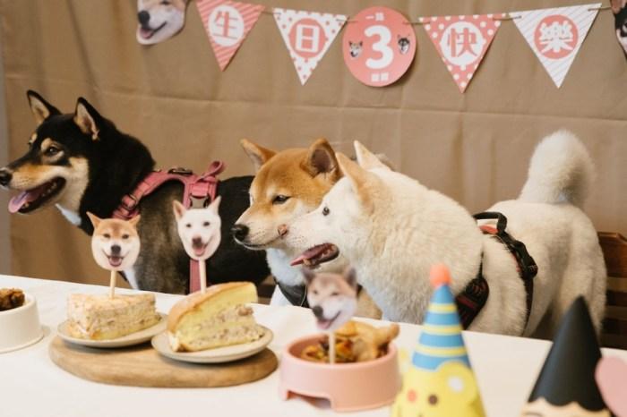 黑吉良食 台中寵物複合式專門店,除了美食還有寵物餐點及寵物慶生服務唷~