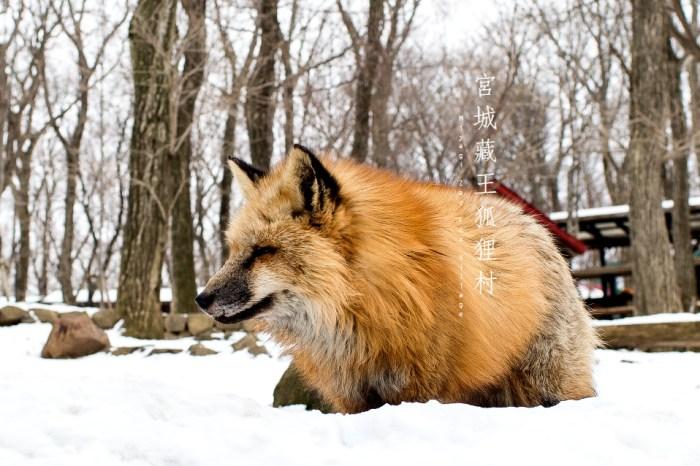 宮城縣 白石 | 藏王狐狸村 – 和100隻毛茸茸狐狸約會