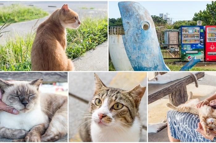 沖繩旅遊 | 貓島 奧武島 – 超療癒的自由行景點推薦/海鮮 生魚片 天婦羅 隱藏版美食小島/自駕交通行程