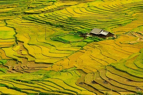 sapa, terrace field, photo, landscape, lens, thai photographer