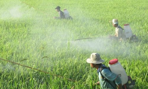 vietnamnet bridge, english news, Vietnam news, news Vietnam, vietnamnet news, Vietnam net news, Vietnam latest news, Vietnam breaking news, pesticide, MONRE, environment pollution