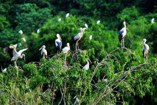 Bird watching in Thung Nham bird sanctuary, travel news, Vietnam guide, Vietnam airlines, Vietnam tour, tour Vietnam, Hanoi, ho chi minh city, Saigon, travelling to Vietnam, Vietnam travelling, Vietnam travel, vn news