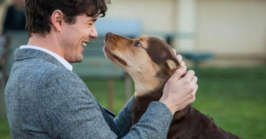 就是弄笑弄哭你,不愛狗也會愛的狗狗電影!┃電影專題