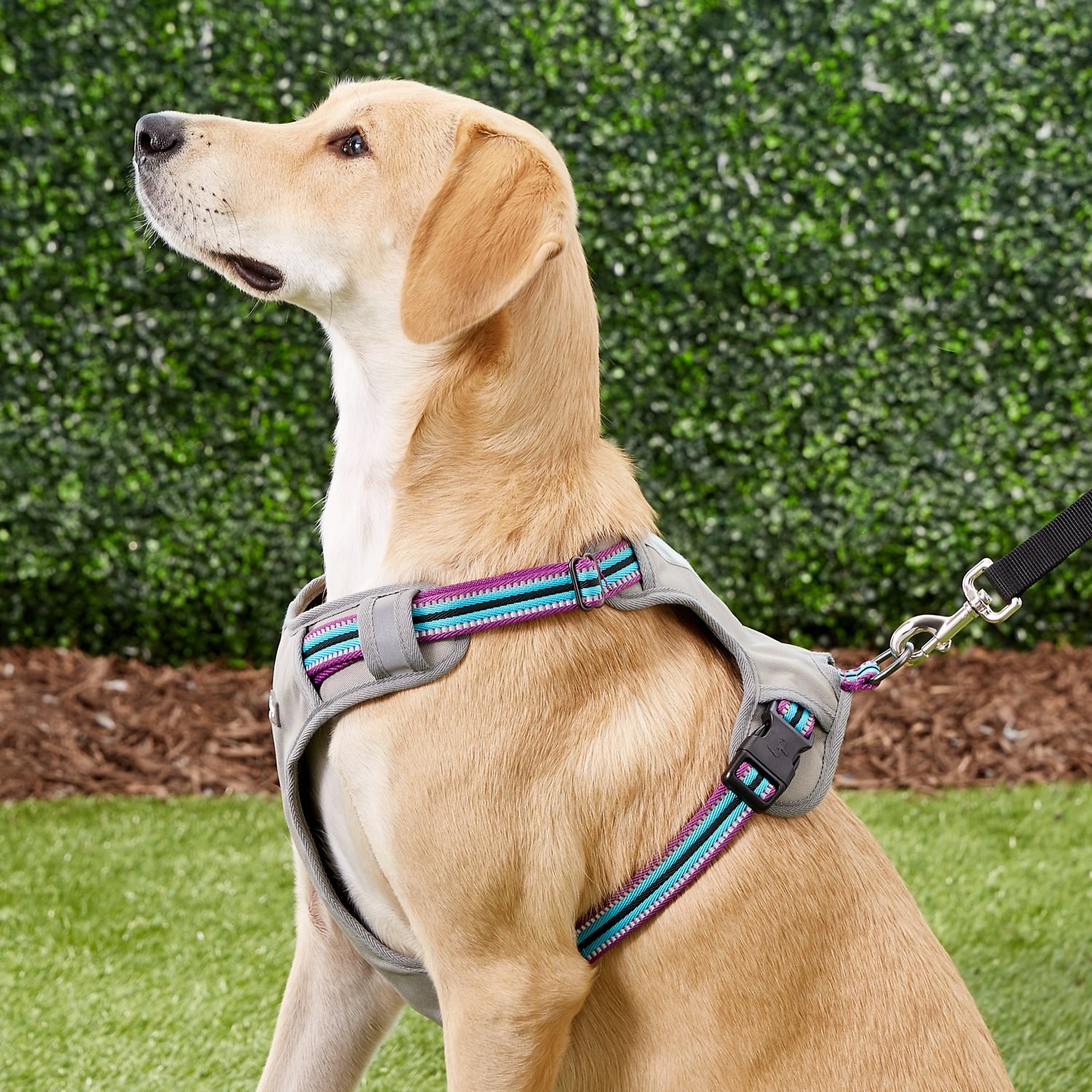 Blueberry Pet 3M Reflective Multi-Colored Stripe Padded