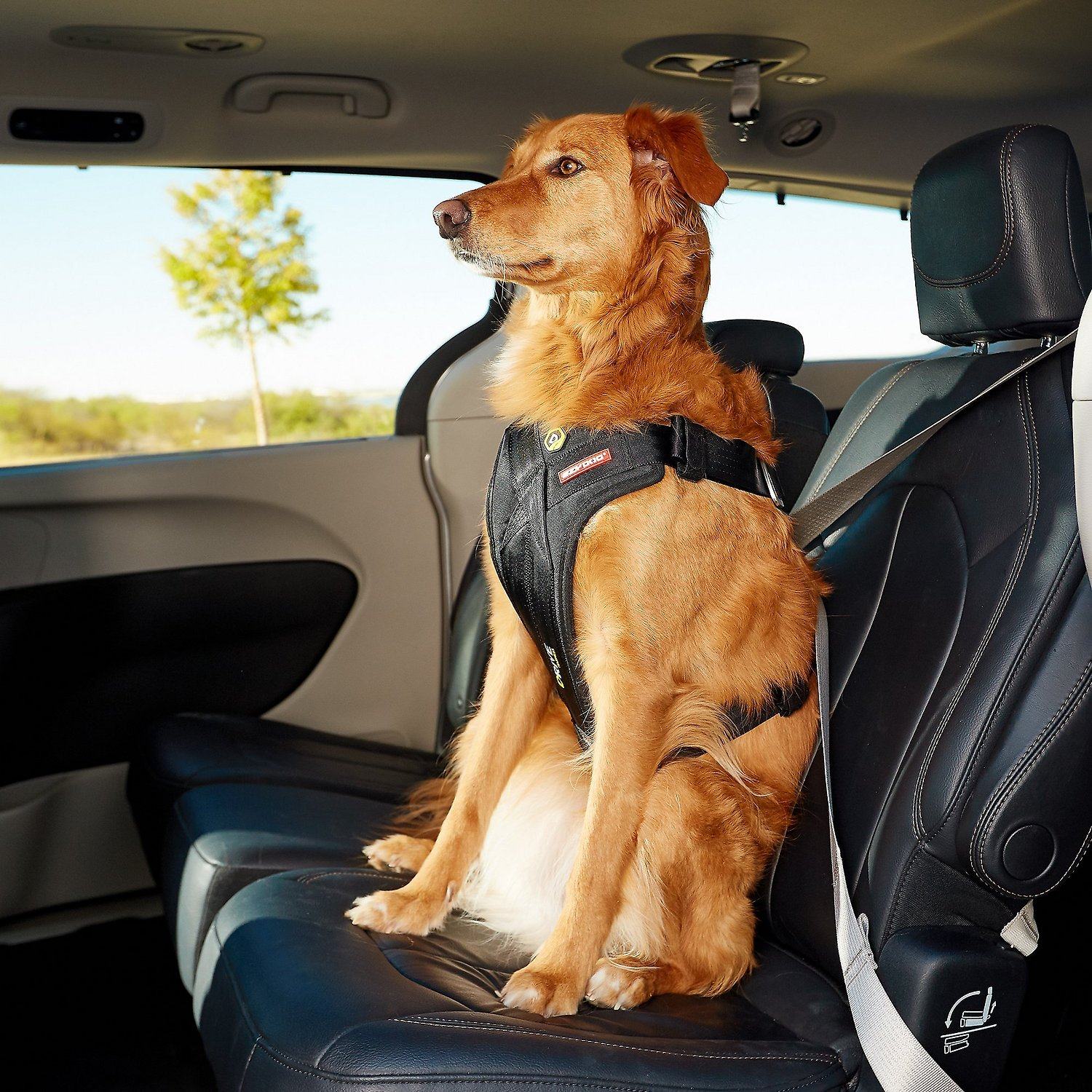 hight resolution of ezydog drive dog car harness large chewy com video