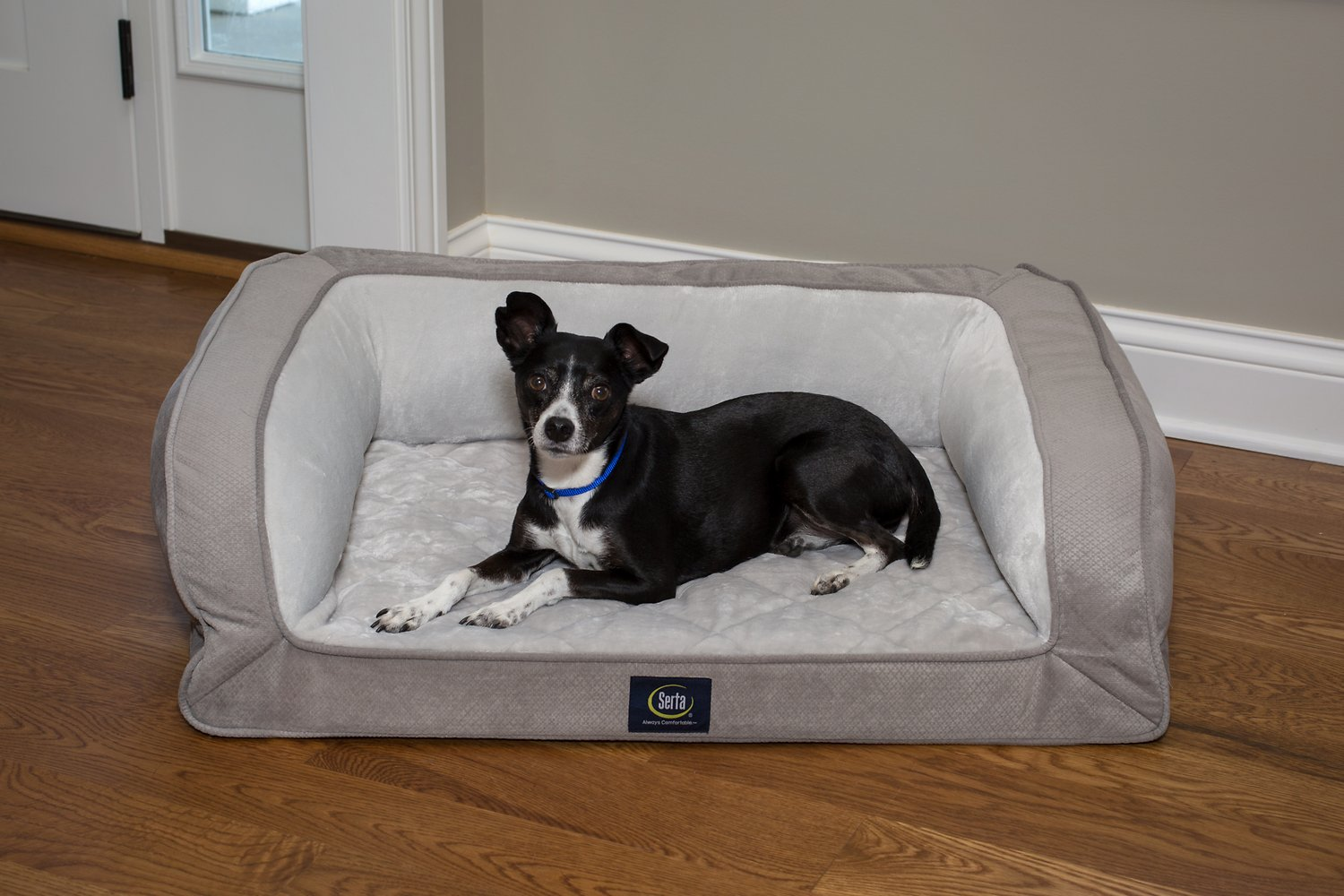 fleas in sofa no pets modern design beds serta orthopedic quilted dog and cat couch bed grey chewy