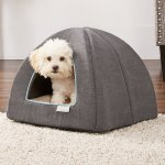 Frisco Igloo Covered Cat Dog Bed Chewy Free Shipping