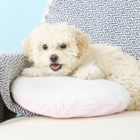 PetZu Heartbeat Pillow, Pink/White - Chewy.com