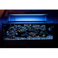 marine fish tank maintenance led lighting 2017 - Fish Tank ...