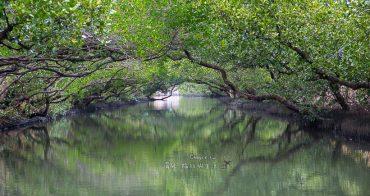 台南必訪 綠色隧道遊船 安平樹屋半日遊 台江國家公園