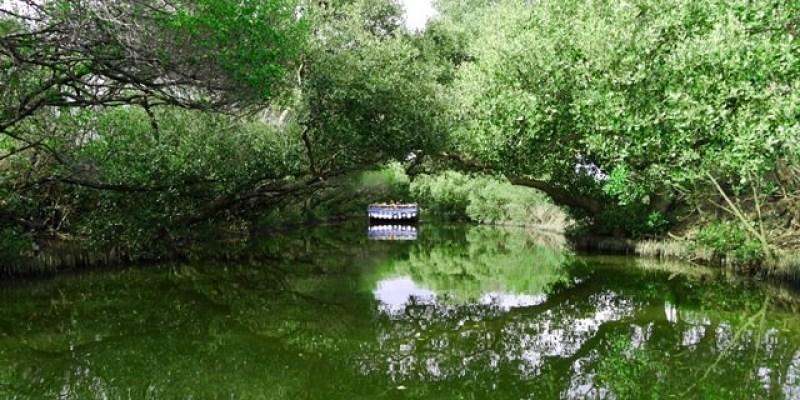 ▌台南必訪景點▌絕美綠色水上隧道!♥四草綠色隧道。綠色之眼♥台版亞馬遜河