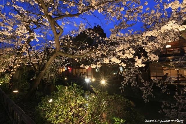 ▌京都。賞櫻▌越夜越美麗。藝妓出沒♥祇園白川南通♥夜櫻好迷人