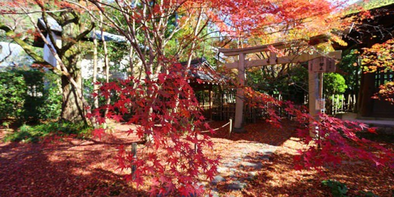 ▌京都賞楓▌♥蓮華寺♥小景卻意外讓人驚豔的楓葉美景