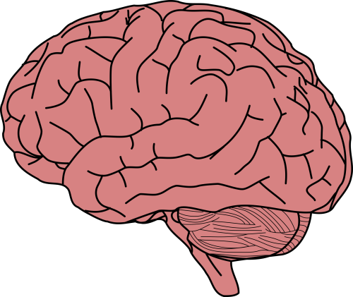 small resolution of big image png brain clipart