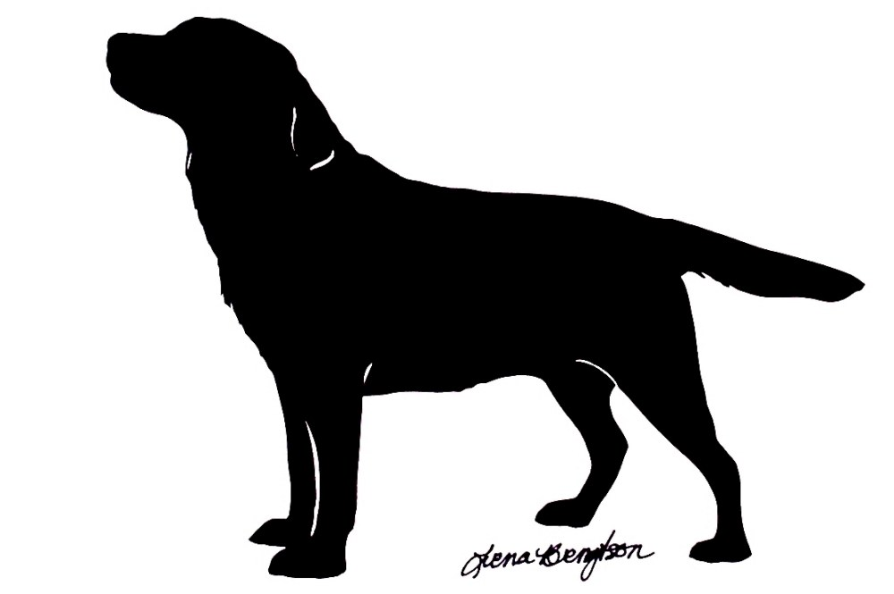 medium resolution of displaying images for maltese labrador retriever clip art