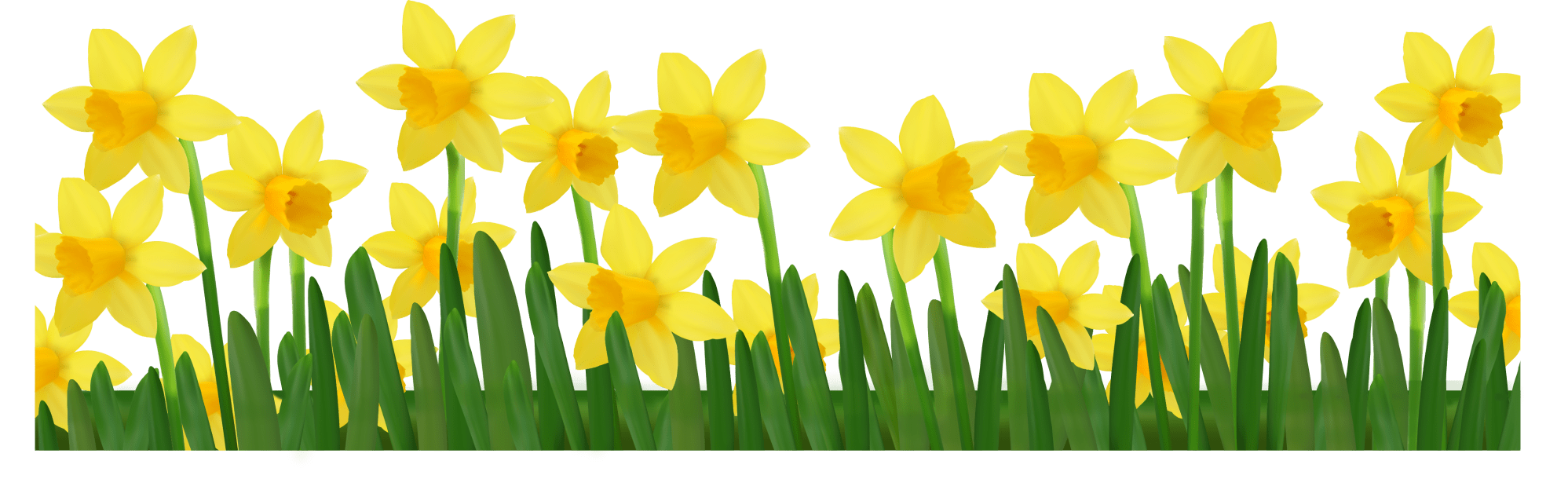 hight resolution of grass with daffodils png clipart picture