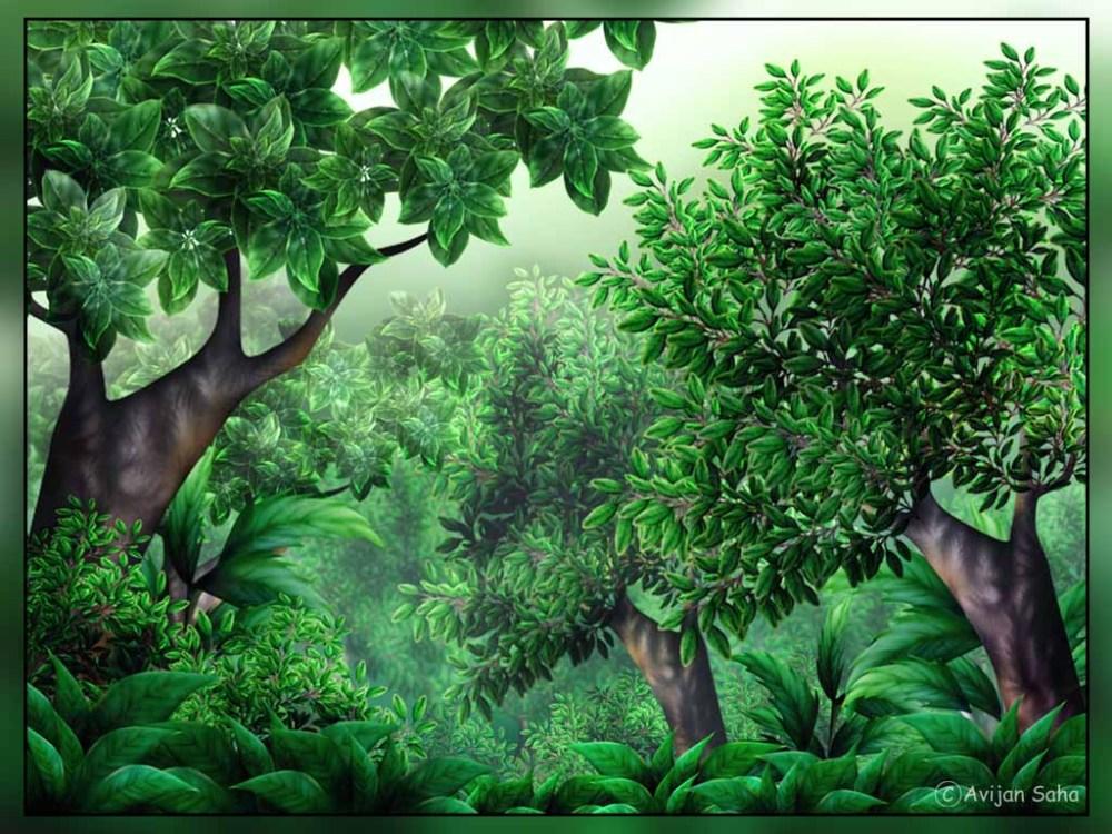 medium resolution of jungle clipart 1