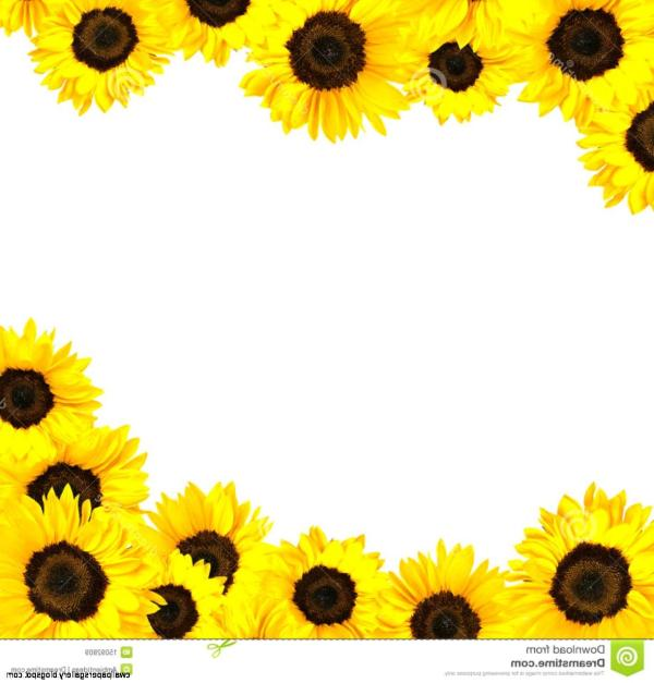sunflowers clipart clipartlook