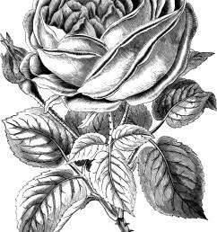 vintage floral clip art victorian clip art [ 2148 x 3128 Pixel ]