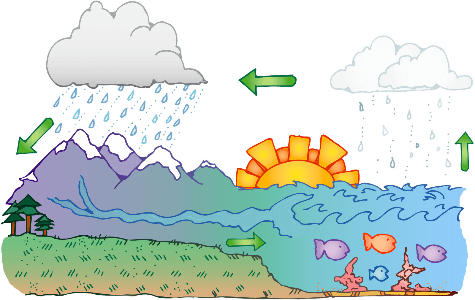 Water Cycle Clipart Amp Look At Clip Art Images