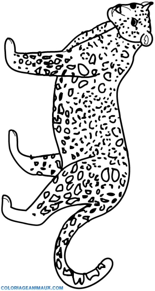 Coloriage guépard cherche à manger à imprimer