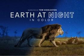 《探索夜色大地》於Apple TV+推出!「洛基」湯姆希德斯頓擔任旁白為大家介紹六大洲野生動物生態