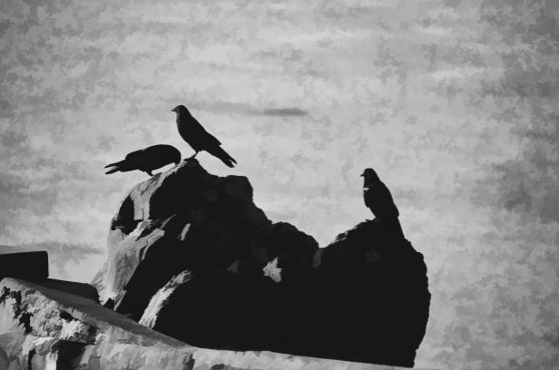 Woke is for the Birds