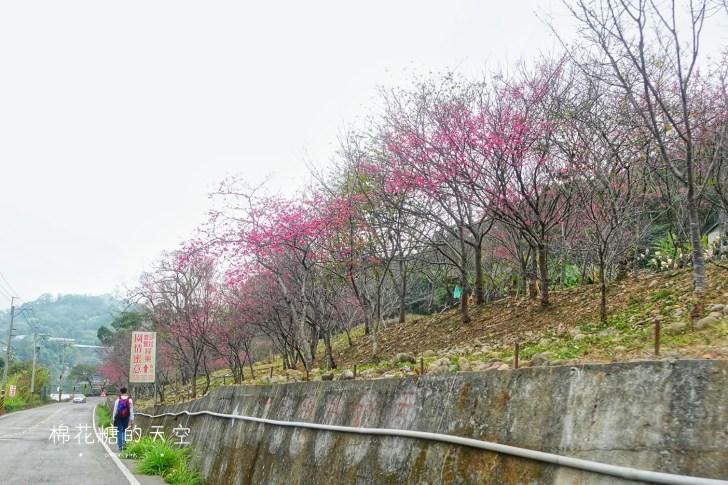 20190223130112 42 - 台中櫻花大開了!新社櫻花私房景點不藏私公開啦!