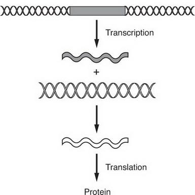 AP Biology Question 213: Answer and Explanation_crackap.com