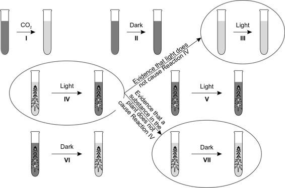 AP Biology Question 413: Answer and Explanation_crackap.com