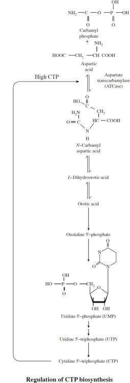 AP Biology Practice Test 11_crackap.com