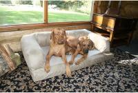 XXXL Large Dog Bed Quality Foam Pet Bed Cushion Big Huge ...