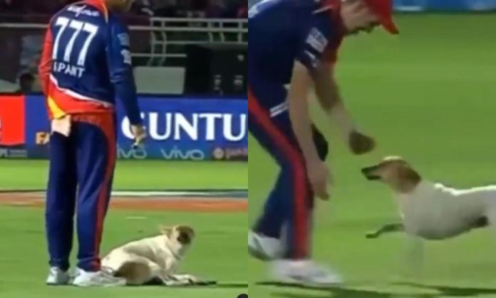 Cricket Image for Ipl 2021 Funny Moments In Ipl Watch Video
