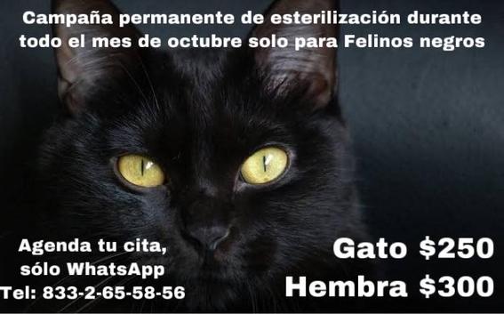gatos negros sacrificios halloween 2