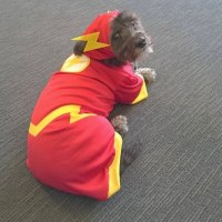 11 Superhero Costumes For Pets