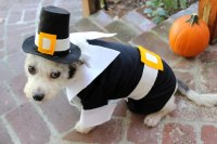 How To Make A Pilgrim Costume For Your Dog   Cuteness