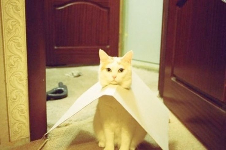 Cats Getting Stuck In Things Is Why We Has Internets Cuteness