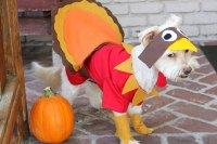How To Make A Turkey Costume For A Dog | Cuteness